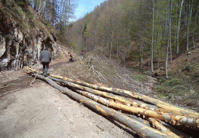 Dezastrul de la cetățile dacice din Munții Orăștiei, negat de Romsilva