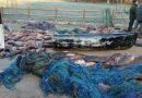 Români arestați în Italia pentru BRACONAJ. Au fost prinși cu 3,6 tone de pește