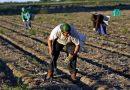 Drepturile lucrătorilor sezonieri care muncesc în Germania și obligațiile angajatorilor