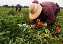 Fața obscură a agriculturii italiene: Românii, printre muncitorii exploatați și prost plătiți
