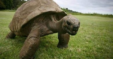 A murit cea mai bătrână broască ţestoasă uriaşă din Africa. Avea 344 de ani