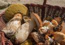 Doi români, condamnați în Franța pentru că au cules prea multe ciuperci
