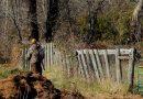 Un tânăr de 21 de ani aflat la braconat a împușcat doi cai și i-a îngropat