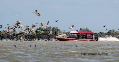 Conexiunile patronului firmei a cărei barcă a intrat într-un stol de pelicani ca să amuze turiștii