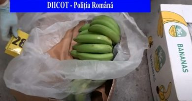 Peste jumătate de tonă de cocaină, găsită ascunsă în cutii cu banane într-un depozit din Ilfov – VIDEO