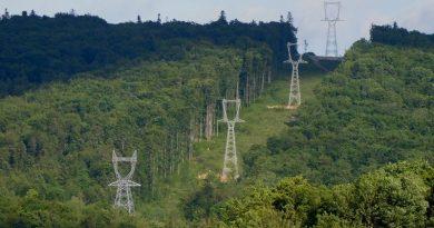 Cârdășia Romsilva – Transelectrica a distrus păduri seculare din două parcuri naționale